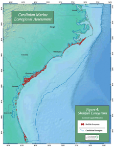 One of the target maps from the Carolinian Assessment indicating shellfish distributions. Click on image to enlarge.