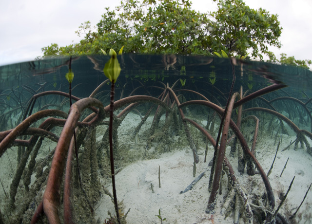 Explore the Mangrove Restoration Potential Map