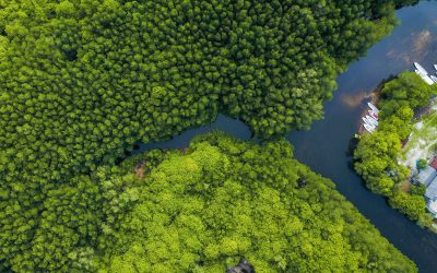 State of the World's Mangroves
